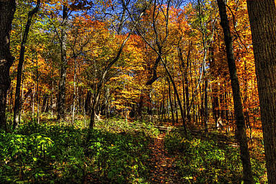 Photograph - Autumn Forest Path At Johnson's Mound by Roger Passman