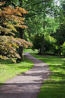 Photograph - Autumn Forest Path by Scott Lyons