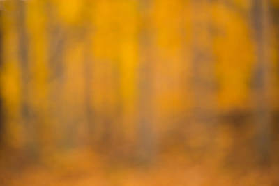 Photograph - Autumn Forest by Pierre Cornay