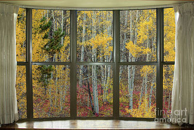 Photograph - Autumn Forest Red Wilderness Floor Bay Window View by James BO Insogna