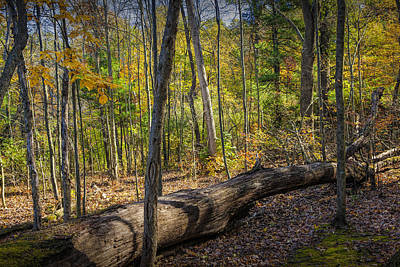 Photograph - Autumn Forest Scene With Fallen Log by Randall Nyhof