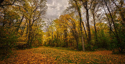 Photograph - Autumn Forest by Stuart Deacon