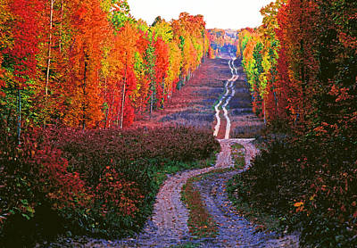 Autumn Forest Track Art Print by Dennis Cox WorldViews