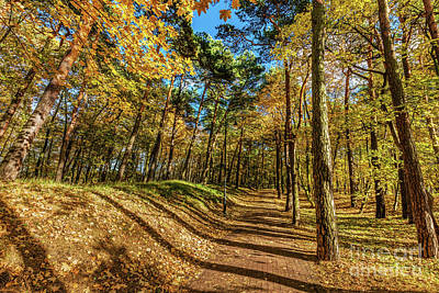 Photograph - Autumn Forest With Colorful Trees, Falling Leaves On A Sunny Day by Michal Bednarek