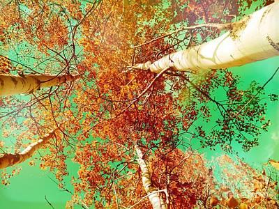 Photograph - Autumn by France Laliberte