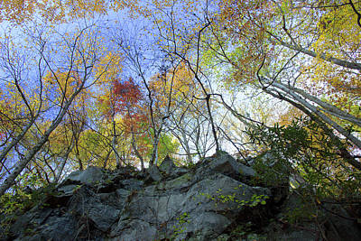 Photograph - Autumn From Below by Mike Eingle