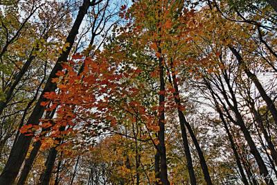 Autumn From Below Original