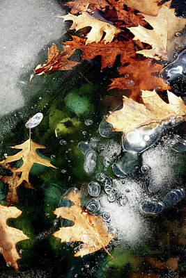 Photograph - Autumn Frost by Cate Franklyn
