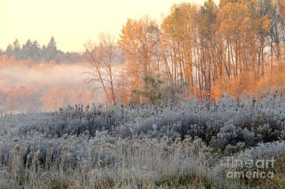 Photograph - Autumn Frost by Frank Townsley