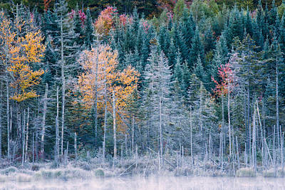 Photograph - Autumn Frost by Jeff Sinon