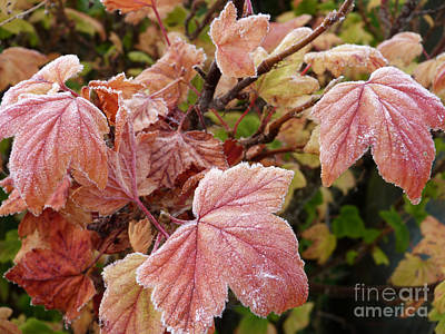 Photograph - First Autumn Frost by Phil Banks