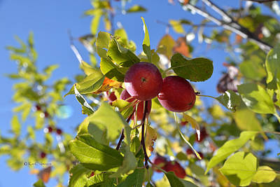 Photograph - Autumn Fruit by Kae Cheatham