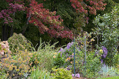 Photograph - Autumn Garden by Alan L Graham