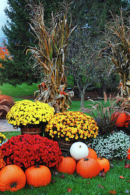 Photograph - Autumn Garden by James Kirkikis