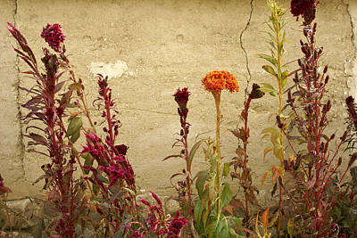 Photograph - Autumn Garden by Michele Burgess