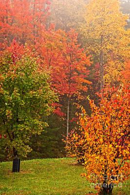 Autumn Gathering Art Print
