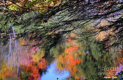 Photograph - Autumn Glory by Elfriede Fulda