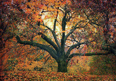 Photograph - Autumn Glory by Jessica Jenney