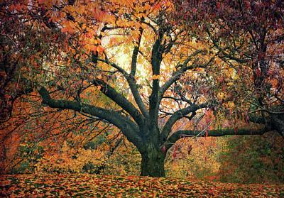 Autumn Glory Art Print