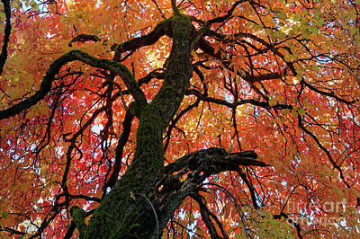 Photograph - Autumn Glory by John  Mitchell