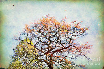 Photograph - Autumn Glory by Kerri Farley