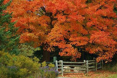 Split Rail Fence Photograph - Autumn Glory by Maria Keady