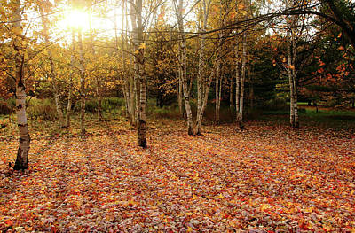 Photograph - Autumn Glow by Debbie Oppermann