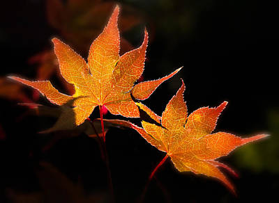 Photograph - Autumn Glow by Denis Lemay