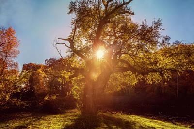 Photograph - Autumn Glow by Lilia D