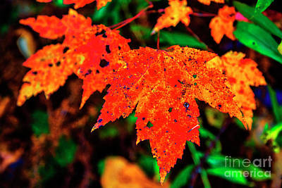 Photograph - Autumn Glow by Rick Bragan