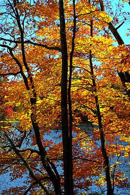 Autumn Gold Art Print by Alan Lenk
