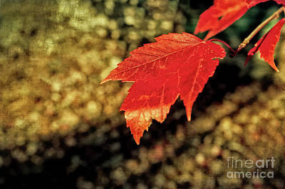 Photograph - Autumn Gold by Anita Pollak
