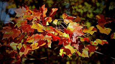 Photograph - Autumn Gold by Ira Shander
