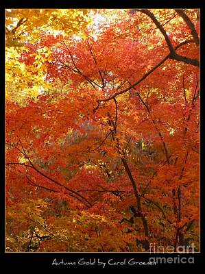 Photograph - Autumn Gold Poster by Carol Groenen