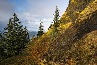 Photograph - Autumn Gold by Robert Potts