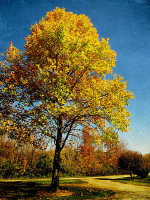 Photograph - Autumn Gold by Shawna Rowe