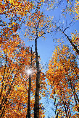 Photograph - Autumn Gold Sunburst by Christina Rollo