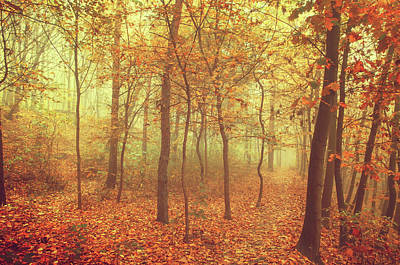 Photograph -  Autumn Golden Forest In Fog by Jenny Rainbow
