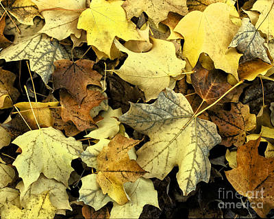 Photograph - Autumn Golden Leaves by Ella Kaye Dickey