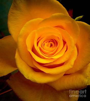 Photograph - Autumn Golden Rose by Joan-Violet Stretch
