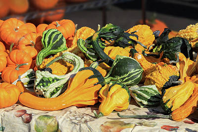 Photograph - Autumn Gourds by Bonnie Follett