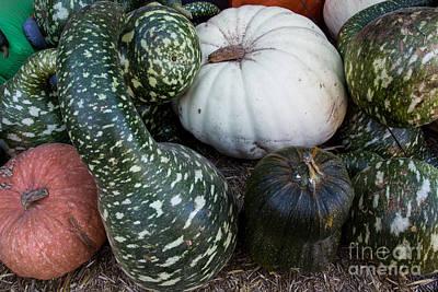 Photograph - Autumn Gourds by Suzanne Luft