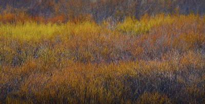 Photograph - Autumn Grass by Nadalyn Larsen