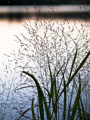 Photograph - Autumn Grasses by Jim DeLillo