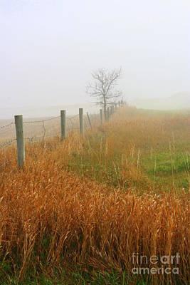 Photograph - Autumn Grasses by Julie Lueders
