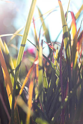 Photograph - Autumn Grasses by Nancy  Coelho
