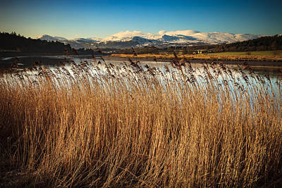 Photograph - Autumn Grasses by Peter OReilly