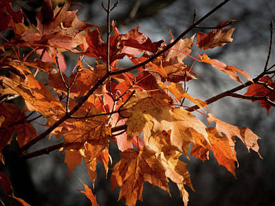 Photograph - Autumn Gray by Kimberly Mackowski