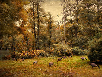 Water Fowl Photograph - Autumn Grazing by Jessica Jenney