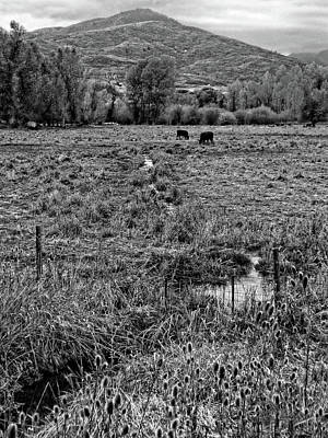 Photograph - Autumn Grazing Photo Bw by David King